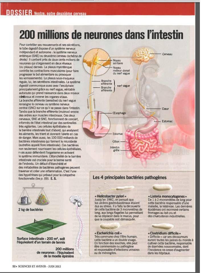 VENTRE, NOTRE DEUXIEME CERVEAU. SCIENCES ET AVENIR Juin 2012. Suite avec les pages 51, 52 et 53