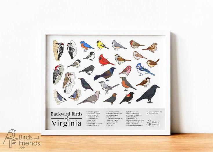 Virginia - Printable Backyard Birds of Virginia Field ...