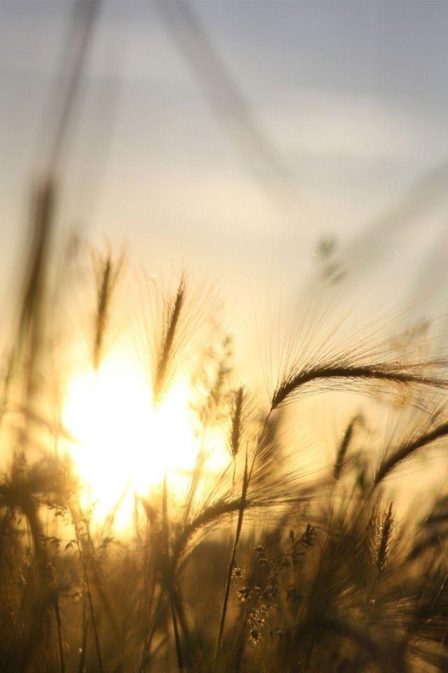 640-Sunrise-Nature-l