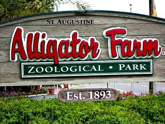 In the late nineteenth century, George Reddington and Felix Fire began collecting alligators on Anastasia Island; they founded the St. Augustine Alligator Farm at South Beach in 1893. By 1910, the Alligator Farm became an established Florida attraction. In the 1920's the original farm was moved to it's present location.