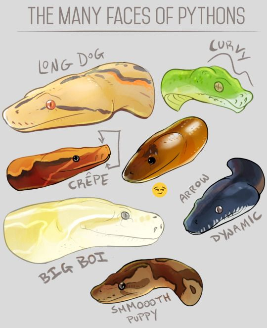 how to draw snake skin