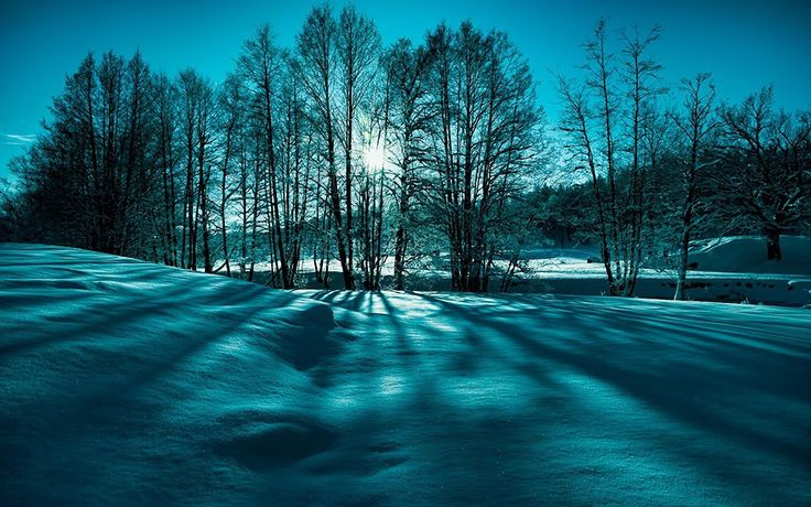 awesome Snow trees winter