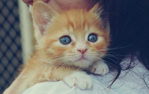 by Jacob MunroBig Cat, Orange Cat, Tabby Cat, Animal Kingdom, Crazy Cat, Blue Eye, Orange Kittens, Cat Crazy, Cat Lady
