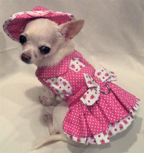 strawberry chihuahua best 25 pet fashion ideas on pinterest chihuahua 8999