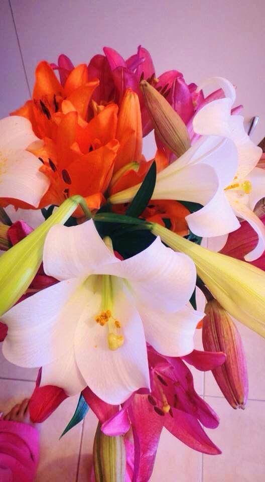 Fresh lillies from backyard
