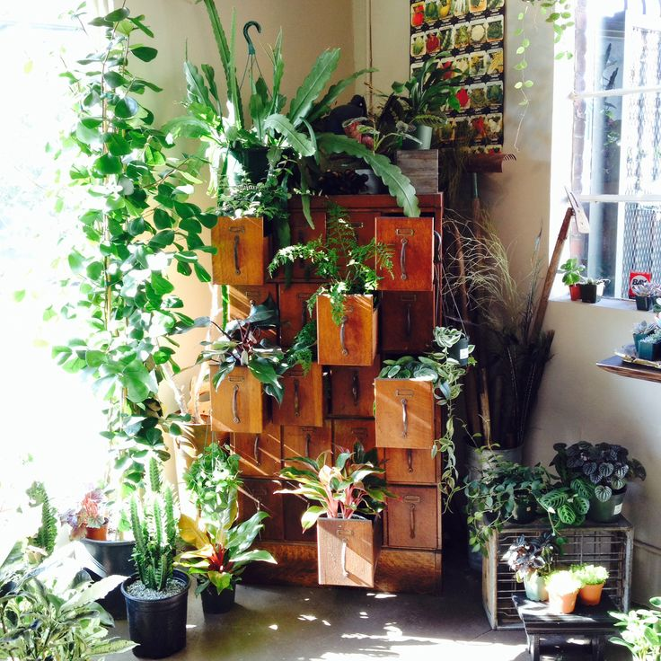 houseplants / Sacred Spaces <3