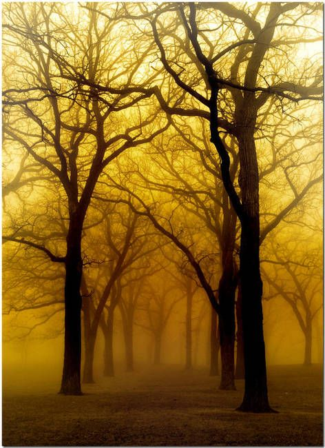 """""""Golden Fog"""" by Carol Schultz, St. Paul, MN //  // Imagekind.com -- Buy stunning, museum-quality fine art prints, framed prints, and canvas prints directly from independent working artists and photographers."""
