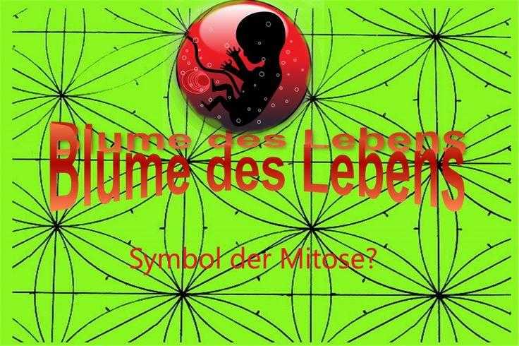 """Bildquelle: OpenClipartPictures/ http://pixabay.com/de/embryo-menschliche-kleinkind-159691/   Wie kommt man zu solchen """"lateralen"""" Überlegungen zwischen der Zellteilung und Blumenmustern?  Mehr Text s. Webseite unten >>"""
