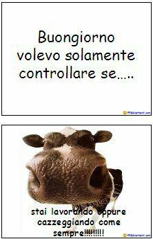 1000 images about buongiorno on pinterest tes happy for Video divertenti di buongiorno