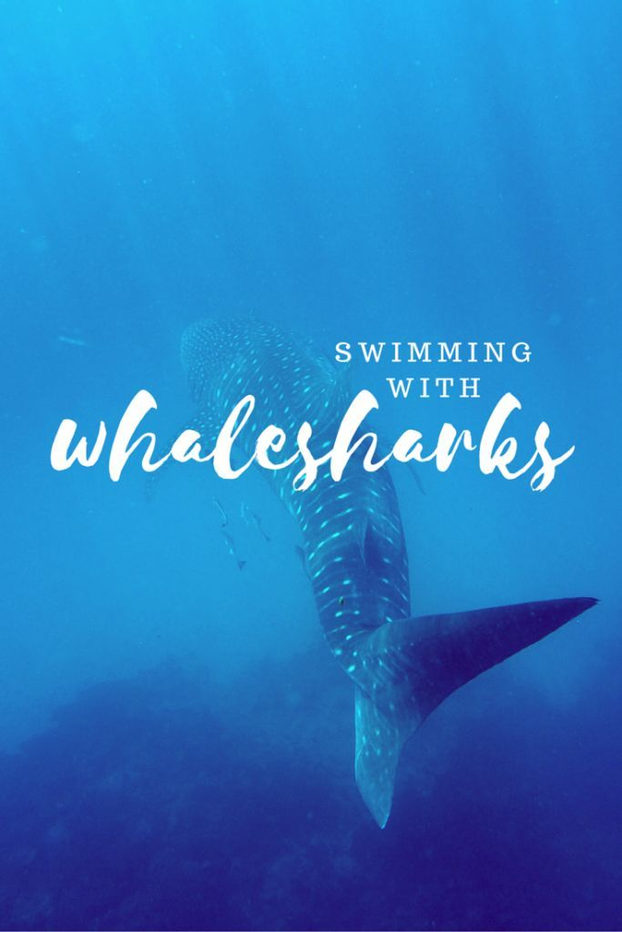Swimming With Whalesharks in Australia