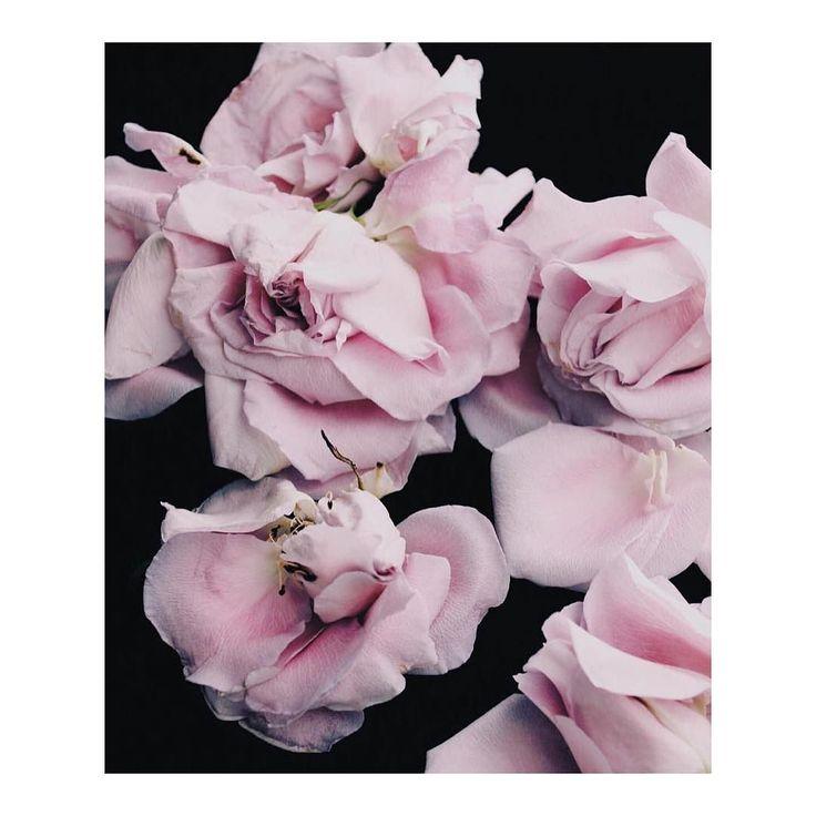 p e r f e c t i o n   via @floralux #pink #flowers #bellamummablooms