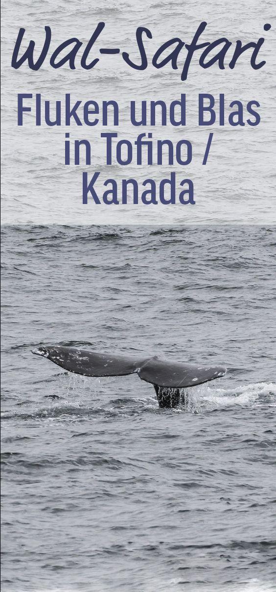 Grauwale, Killerwale, Robben, Weißkopfseeadler - Vancouver Island in Kanada ist ein Naturparadies. Viele Wal-Safaris gehen von dem kleinen Ort Tofino aus los. Hier ist mein Bericht über Whale Watching in Tofino ...