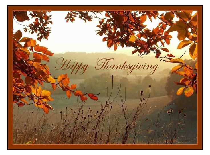 Happy Thanksgiving | Alliance of International Aromatherapists