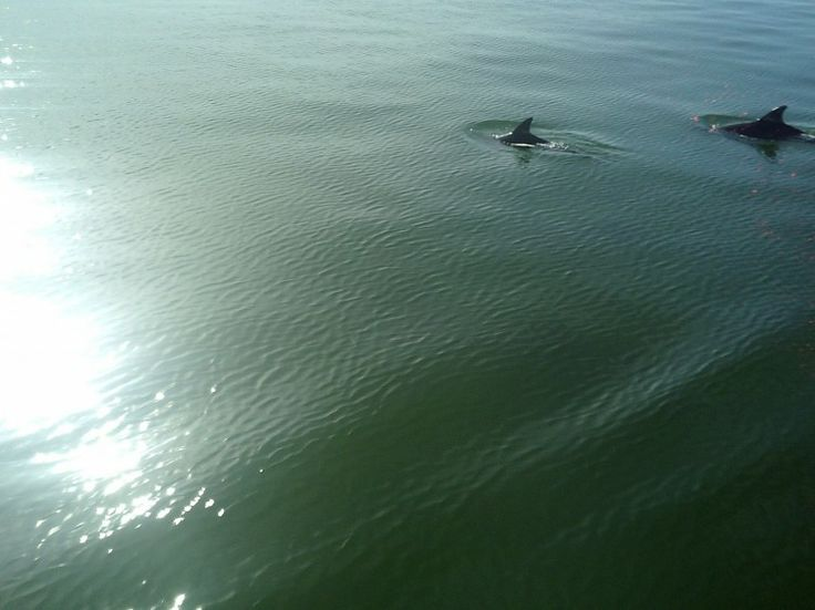 A afternoon with the bay Dolphins the pic of the day