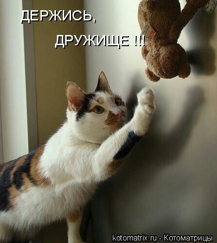 Шоке картинки, держись картинки прикольные котики