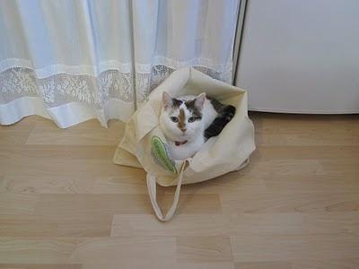 Tuulenpesä: Kissat