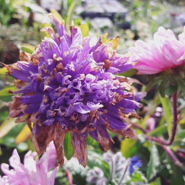 Die besten 25+ Hügelbeet Ideen auf Pinterest Garten am Hügel - kies garten gelb