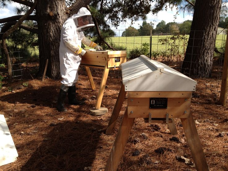 Part 4: Hallelujah, we defeated the Africanized honey bees!