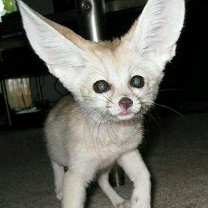 Exotic pets ..so cute!!