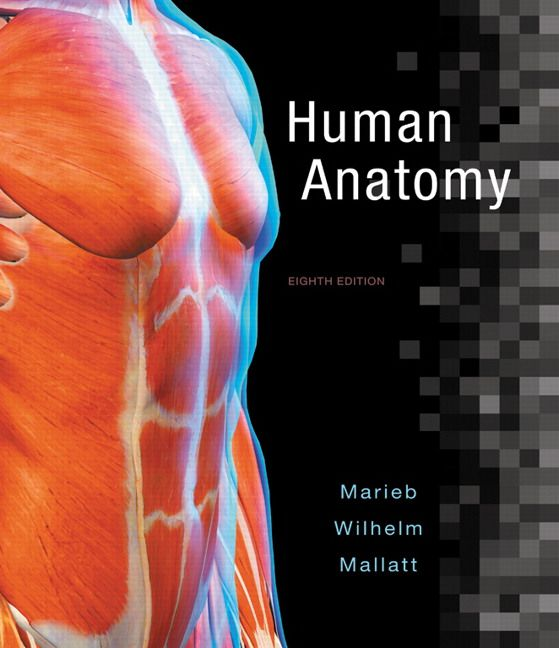 Human Anatomy 8th Edition Marieb Solutions Manual test banks ...