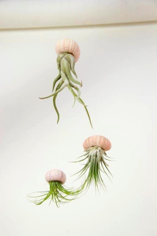 Ensemble des plantes de l'air chez les oursins de mer