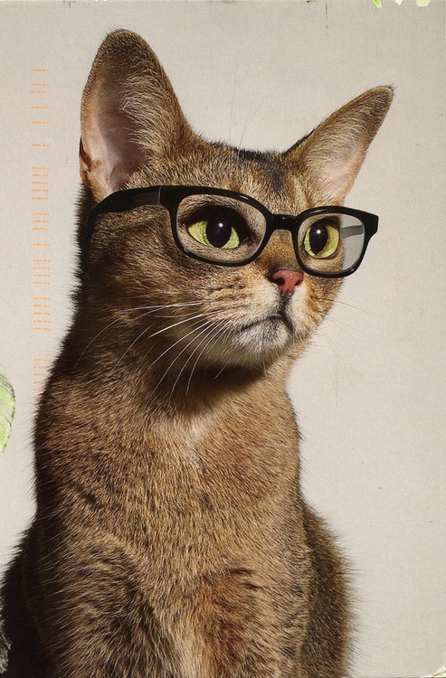 """O.K. CLASS.....MY NAME IS""""MISS FURRIER"""".....WHEN I CALL OUT YOUR NAME,""""HISS"""" OR SAY """"MEOW"""""""