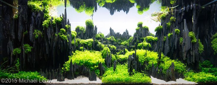 1000+ images about aquascaping on Pinterest Aquarium driftwood, Fish ...