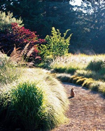 "Pathway - Lucy, the Reids' cat, basks in the morning sun amid the rustle of grasses, including Calamagrostis x acutifolia ""Stricta,"" Miscanthus sinensis ""Gracillimus,"" Panicum virgatum ""Hanse Herms,"" and Deschampsia cespitosa."