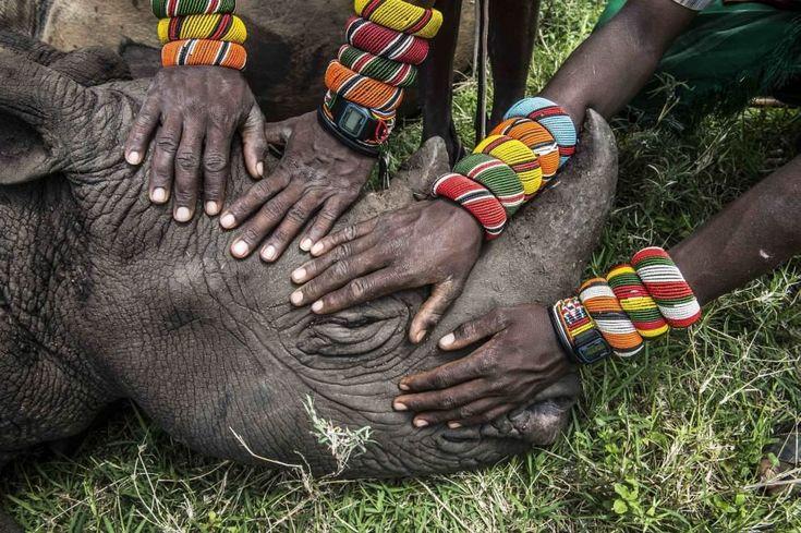 Secondo premio - Categoria Natura (scatto singolo)  Un gruppo di giovani guerrieri Samburu vede un rinoceronte per la prima volta in Kenya  Ami Vitale/National Geographic (reuters)World Press Photo 2015: