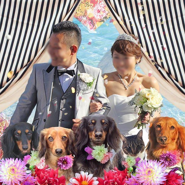 ❀ * #アトリエFarsley * * #ウェディングフォト その3 * * 🌸💖🌸💖🌸💖🌸💖 * #フォトウェディング  #結婚式  #wedding  #ウェディング  #pets_perfection  #instagramjapan  #nature_cuties  #dogs_of_instagram  #pupdoggydog  #meowvswoof  #bestwoof  #dog_features  #dogsofinstagram  #Excellent_Puppies  #puppytales  #inutokyo #pecoいぬ部  #wooftoday  #FurrendsUpClose  #igclub_dogs  #Instadog  #puppytrip  #Excellent_Dogs  #puppiesforall #inulog #bestfriends_dogs  #west_dog_japan
