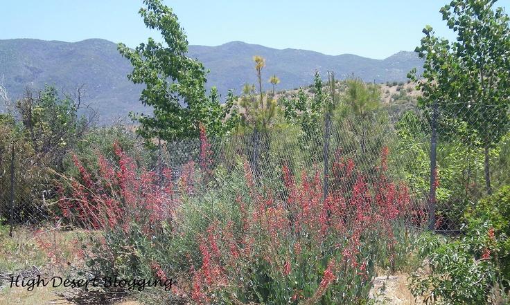 High Desert Native Plants