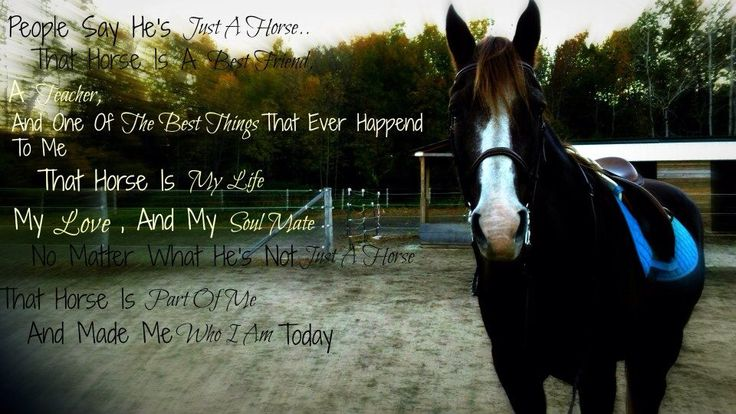 My baby boy #horse #love #quote #horses | Others ...