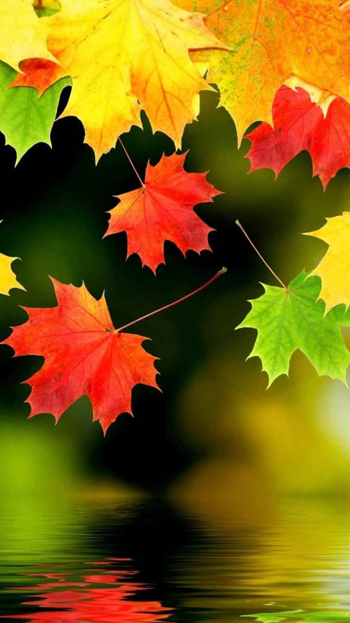 20 Fall Nature Wallpaper Hd Backgrounds For Iphone Android Lock Screen Autu Fall Foliage Wallpaper Fall Nature Wallpaper Nature Wallpaper Background Awesome