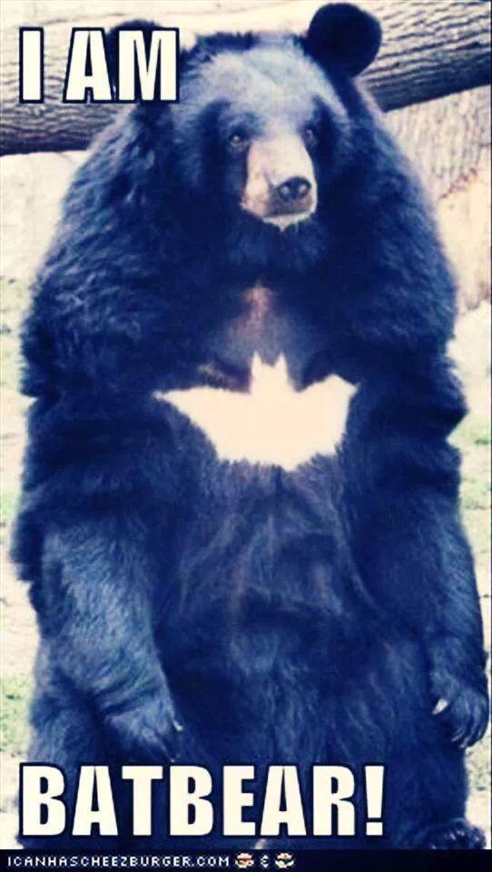 BatBear Animals Pinterest