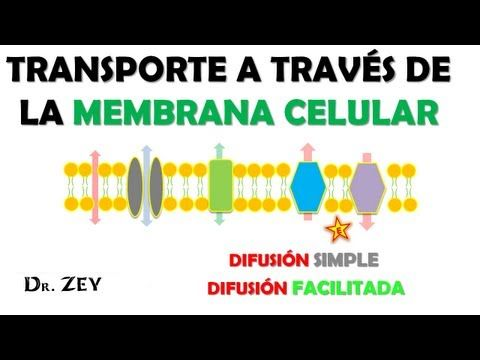 DIFUSION SIMPLE Y FACILITADA. TRANSPORTE PASIVO. - YouTube