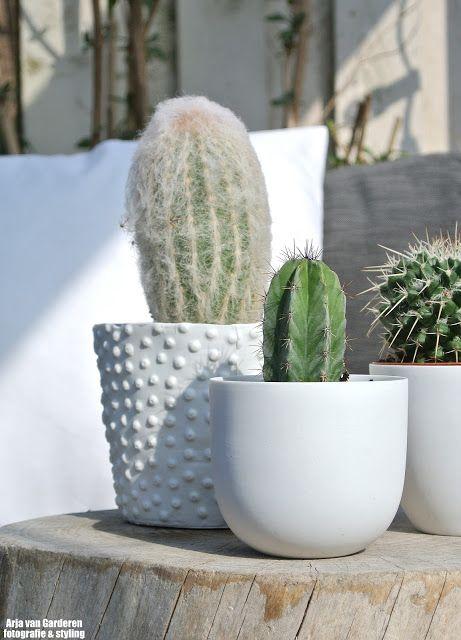 Kaktus de musthave van dit seizoen #kwantum #kwantumnajaar