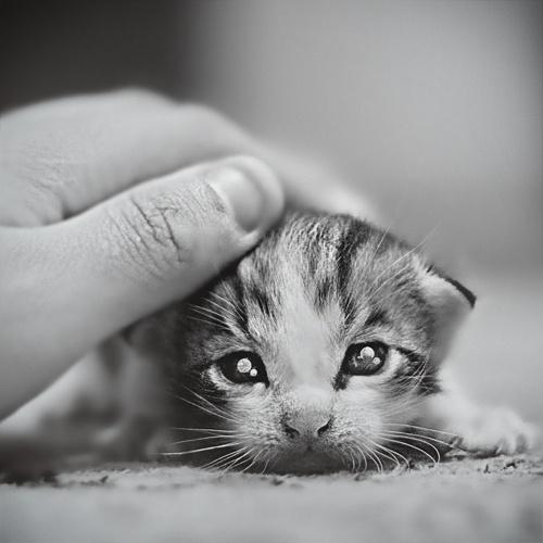 awwwBig Cat, Kitty Cat, Animal Baby, Baby Kittens, Baby Animal, New Baby, Baby Kitty, Eye, Baby Cat