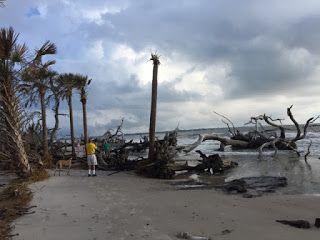 Driftwood Beach After Irma - Thrive Review