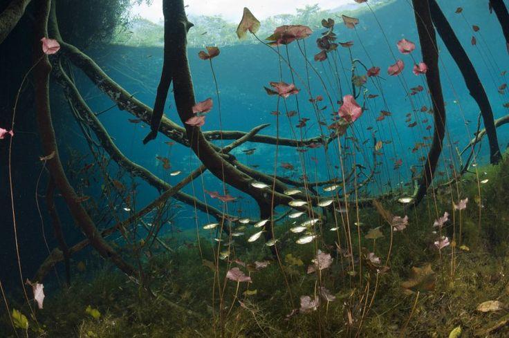 Tatsächlich haben die Cenoten besondere Aufmerksamkeit nötig: Sie sind ein fragiles Ökosystem. Durch unterirdische Flussläufe sind viele Wasserstellen miteinander verbunden. Eine Verunreinigung würde gleich eine ganze Kette der Frischwasserquellen in Mitleidenschaft ziehen, einschließlich des Karibisches Meeres und seiner Riffe.