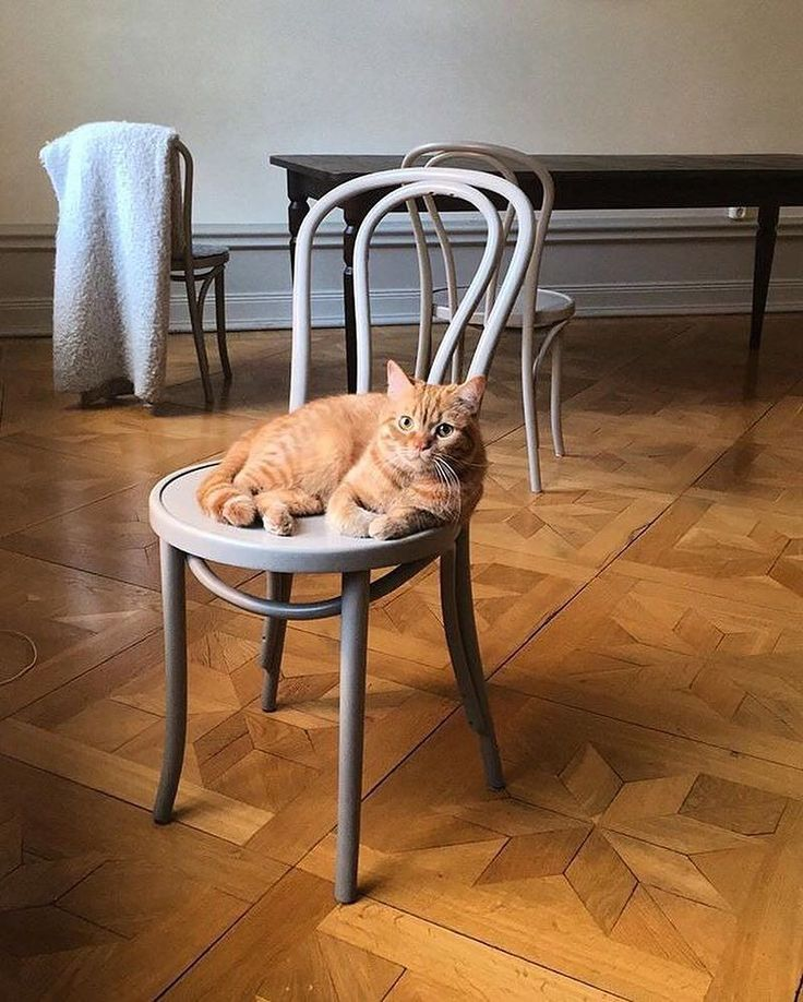 Our Vienna Dining Chair is just purrfect for you @charlietheswagcat  #CrateStyle