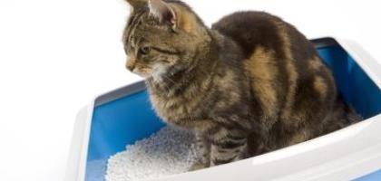 Trucos para deshacerse del olor a orina de gato | eHow en Español