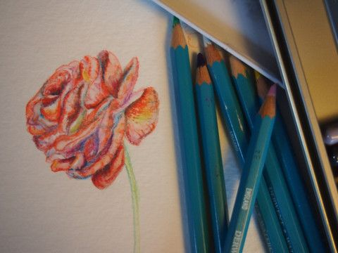 Intro to Watercolour Pencils: Flowers - Adult - Tuesdays, September – WAFFLE KISSES STUDIO