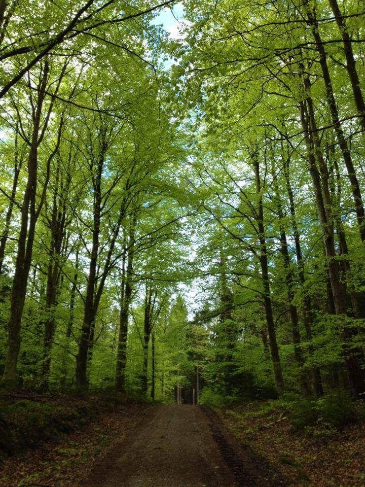 #bokskog #skog #skogsväg #grusväg #grönalöv