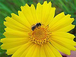 Criar insectos: los agricultores pueden ayudar a recuperar a los polinizadores