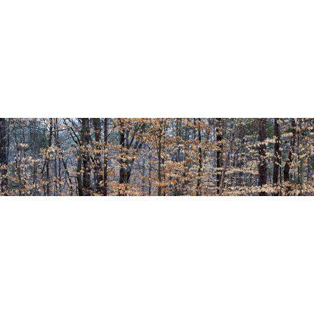 Trees in autumn Lewisville Forsyth County North Carolina USA Canvas Art - Panoramic Images (36 x 12)