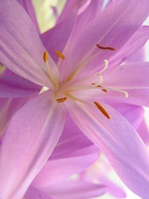 Common Uses of Saffron