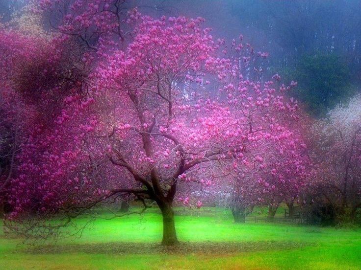 Nature Art by Nikhat Afreen, via 500px