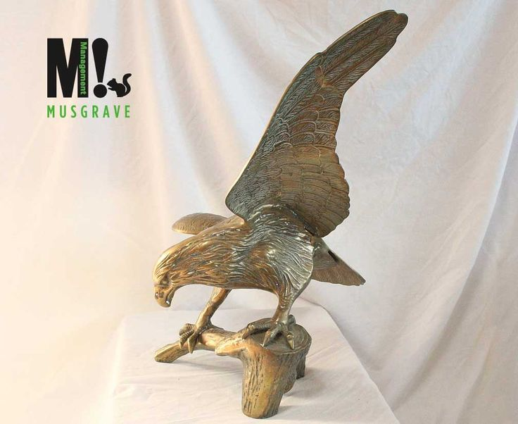 """Eagle Bronze. Musgrave brings World-Class art to the market sold through their alliance with """"best of class"""" E-Bay and Amazon Sellers. We provide inventory, freight , cost of sales and a big commission. If you are an E-Bay, Amazon or Shopify seller of high quality luxury art and décor visit us http://musgravemgt.com/ for info on how we can be of help.  #art #statue #bronze #brass #E-Bay #Amazon #selling #luxury #decor"""