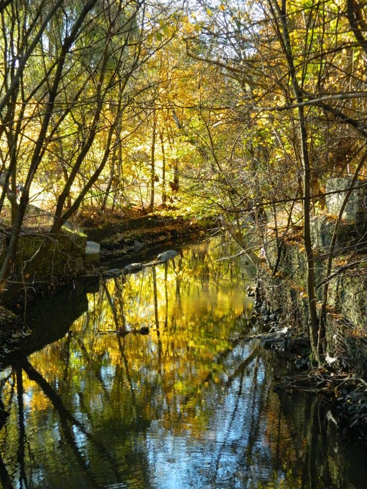 Taylor Creek autumn foliage reflection by garden muses: not another Toronto gardening blog.