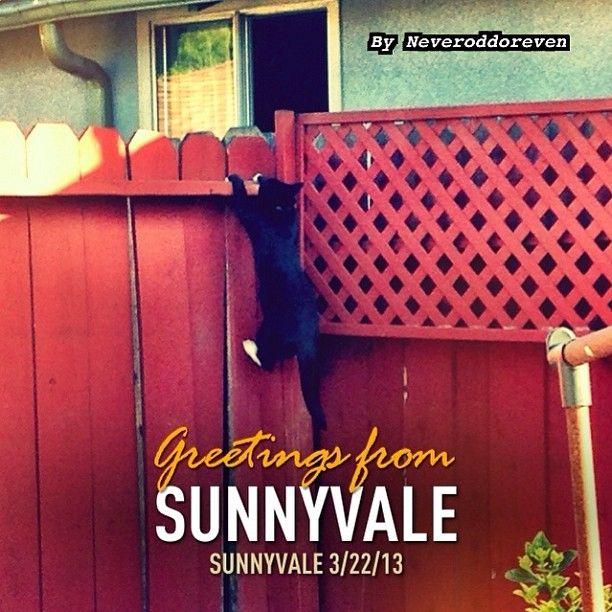 Sunnyvale, CA in California